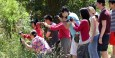 Tourists hounding the koalas on Cape Otway Road