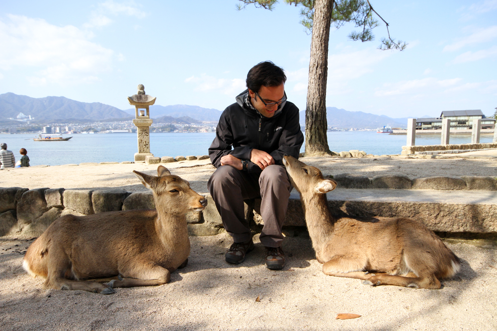 Making furry, fuzzy friends on Miyajima Island