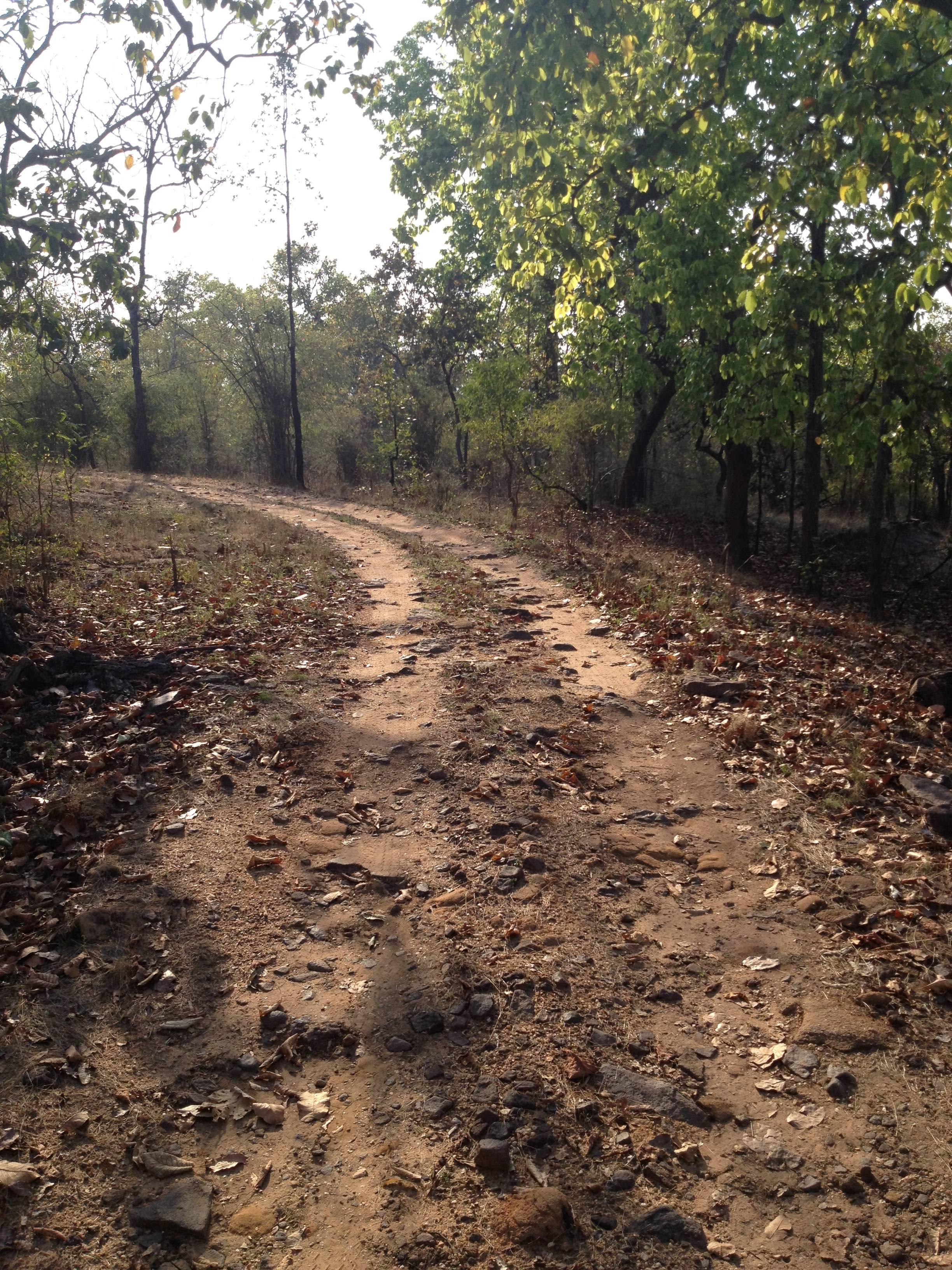 Bandhavgarh