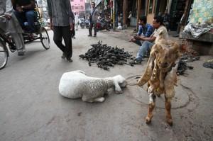 Asia, India, New Delhi, Delhi, jama masjid, car parts, goats,selling, street, vendor, busy