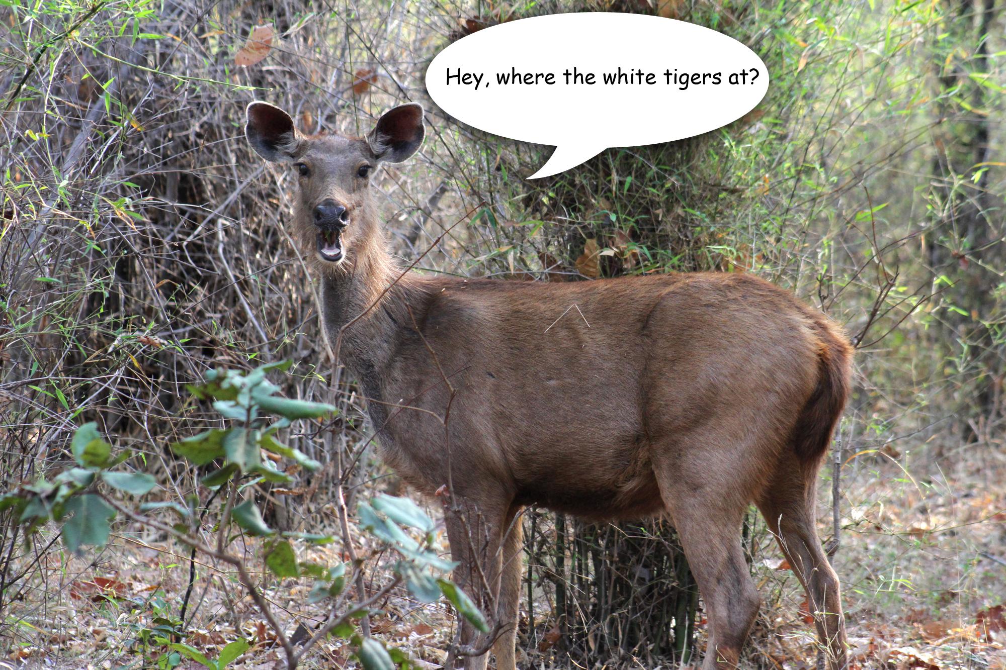 Talking deer