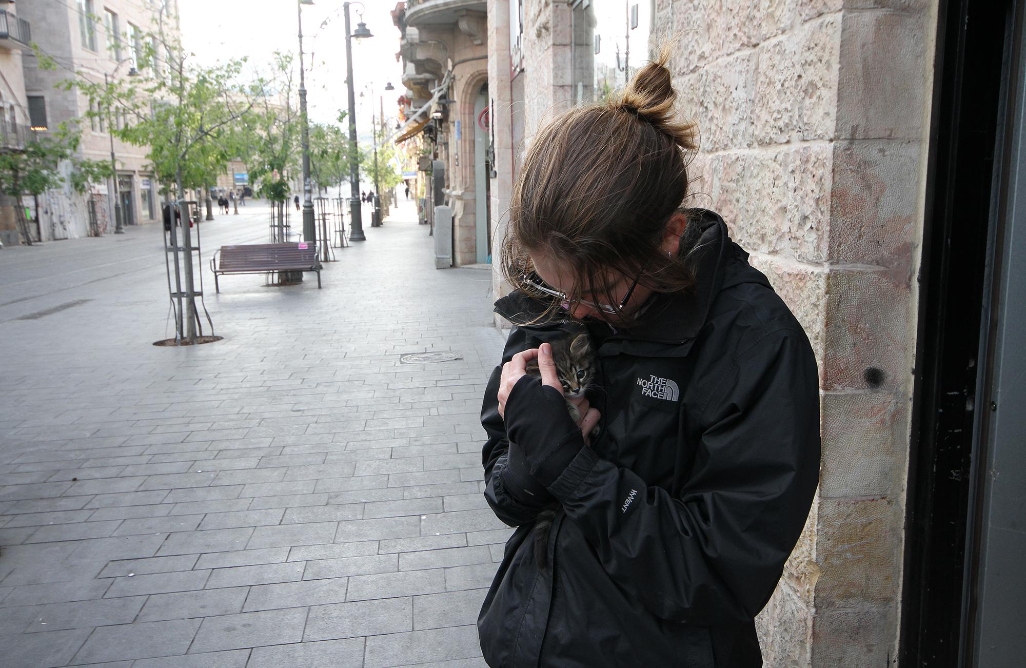 Jerusalem kitten