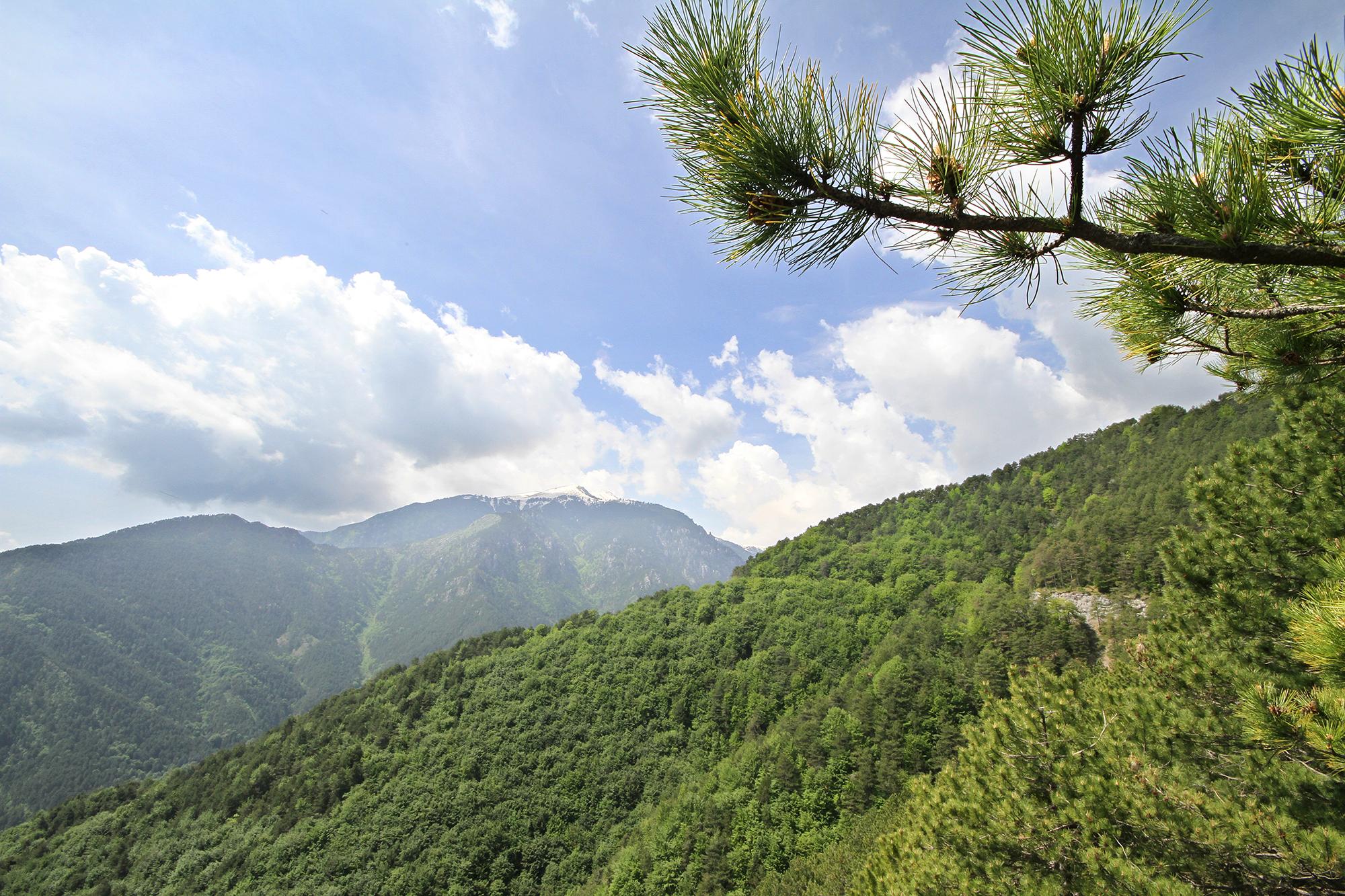 Mt. Olympus vista