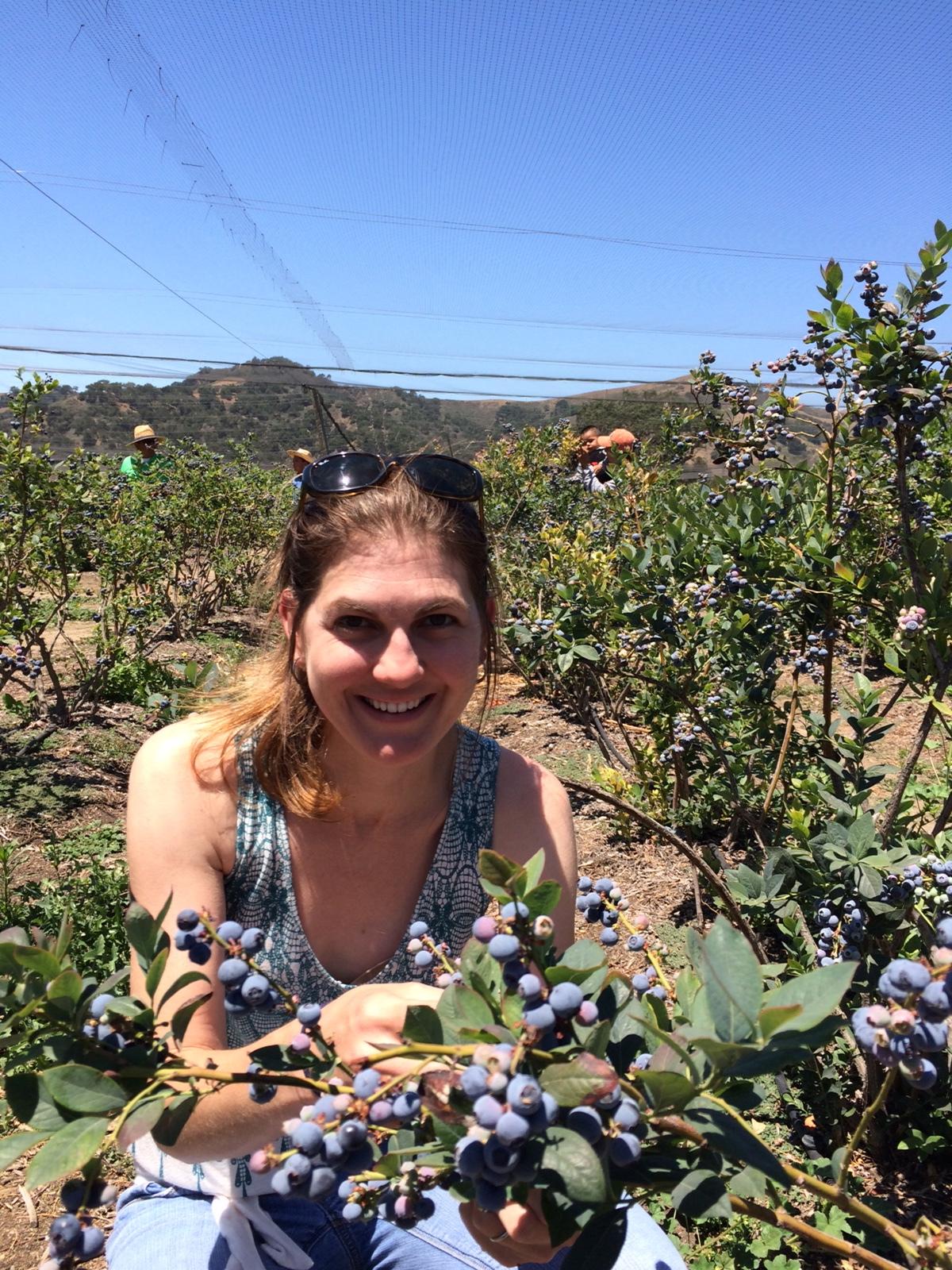 Santa Barbara blueberres