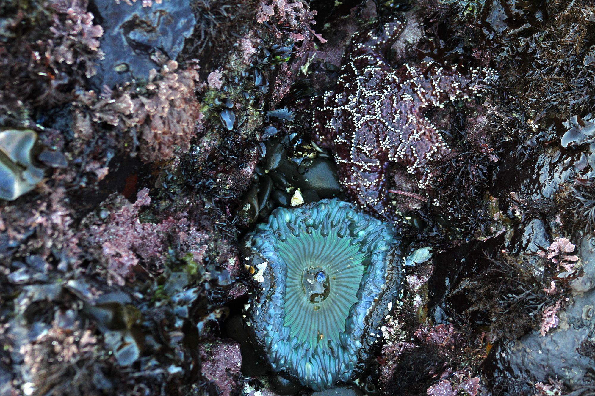 Sea star and sea anemone